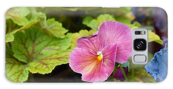 2015 After The Frost At The Garden Pansies 3 Galaxy Case