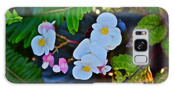 2015 Early September At The Garden Begonias Galaxy Case