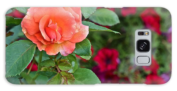 2015 Fall Equinox At The Garden Sunset Rose And Petunias Galaxy Case