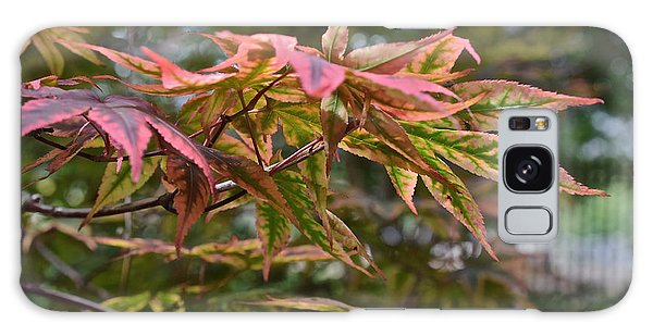 2015 Mid-september At The Garden Japanese Maple 1 Galaxy Case
