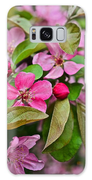 2015 Spring At The Gardens Pink Crabapple Blossoms 2 Galaxy Case