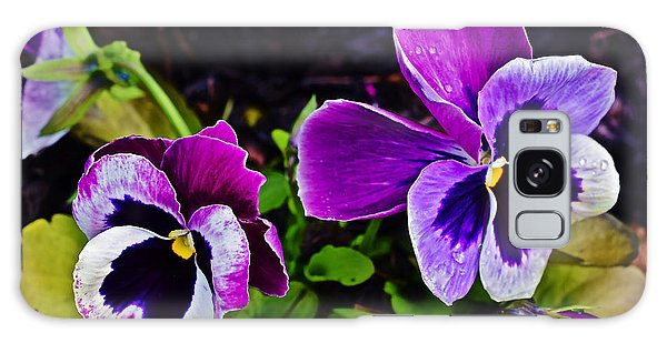 2015 Spring At Olbrich Gardens Violet Pansies Galaxy Case