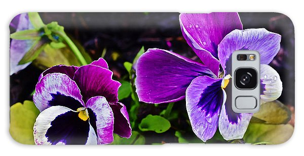 2015 Spring At Olbrich Gardens Violet Pansies Galaxy Case