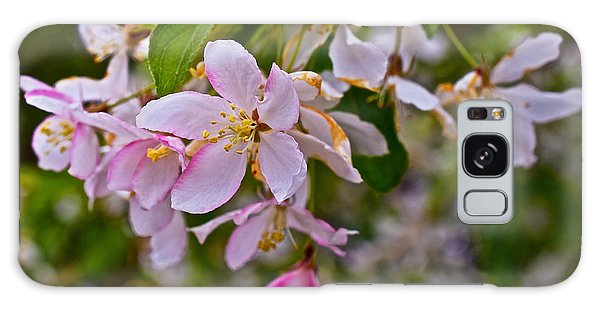 2015 Spring At The Gardens White Crabapple Blossoms 1 Galaxy Case