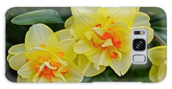 2015 Spring At The Gardens Tango Daffodil Galaxy Case