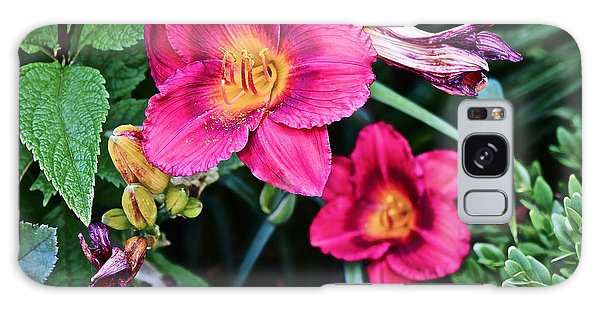 2015 Summer At The Garden Strawberry Candy Daylily 2 Galaxy Case