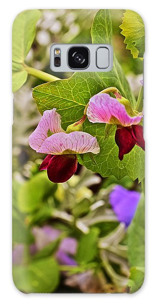 2015 Summer's Eve At The Garden Sweet Pea 2 Galaxy Case