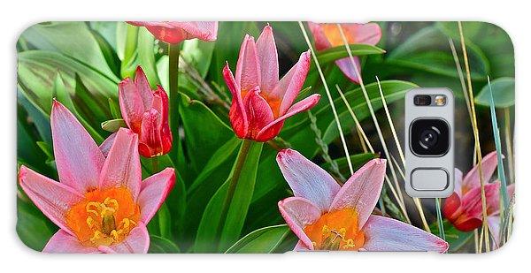 2016 Acewood Tulips 2 Galaxy Case