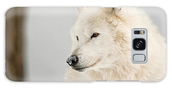 Arctic Wolf Portrait Galaxy Case