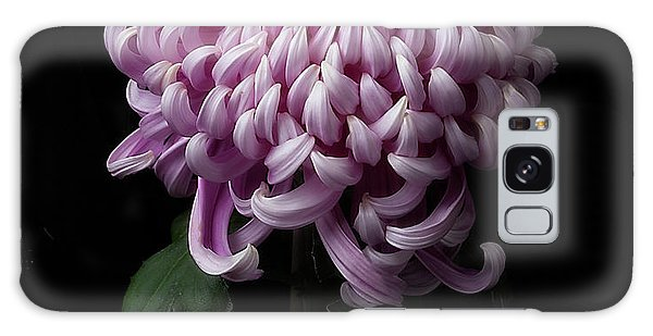 Chrysanthemum 'jefferson Park' Galaxy Case