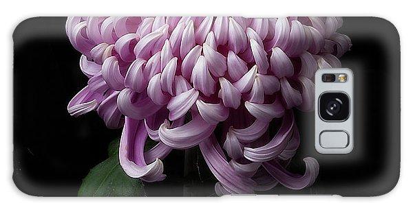 Chrysanthemum 'jefferson Park' Galaxy Case