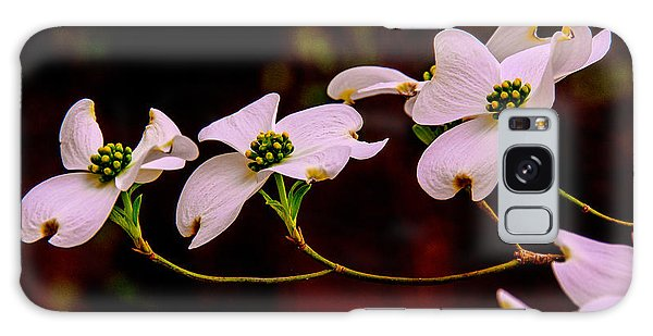 3 Dogwood Blooms On A Branch Galaxy Case