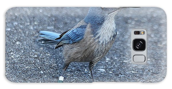 Florida Scrub Jay Galaxy Case