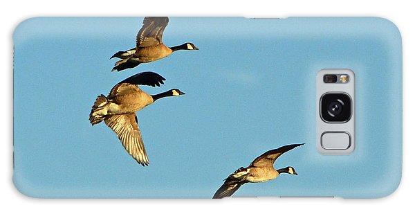 3 Geese In Flight Galaxy Case
