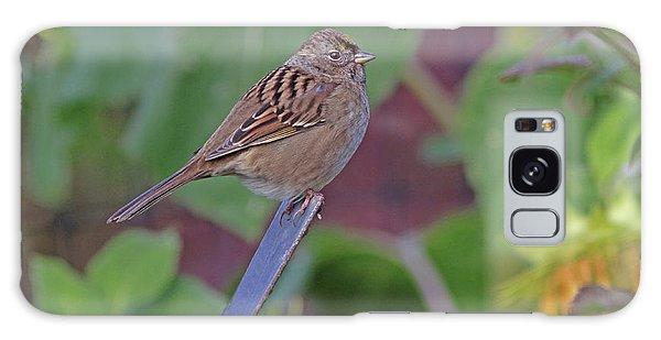 Golden-crowned Sparrow Galaxy Case