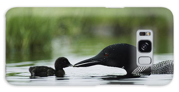 Loon Galaxy S8 Case - Loons by Michael S Quinton