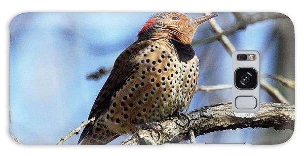 Northern Flicker Woodpecker Galaxy Case