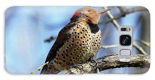 Northern Flicker Woodpecker Galaxy Case