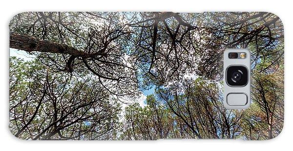 Pinewood Forest, Cecina, Tuscany, Italy Galaxy Case