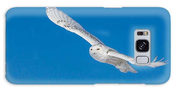 Snowy Owl Galaxy Case by Dan Traun