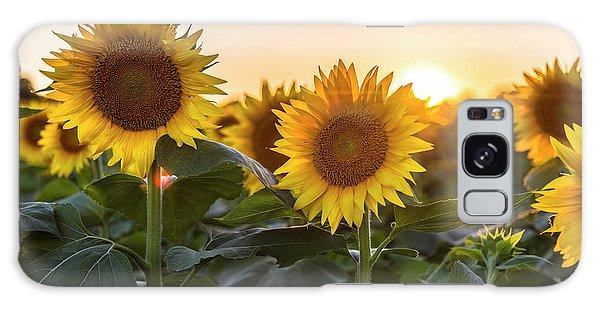 Sunflower Sunset Galaxy Case