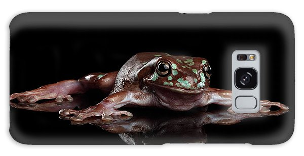 Australian Green Tree Frog, Or Litoria Caerulea Isolated Black Background Galaxy Case by Sergey Taran