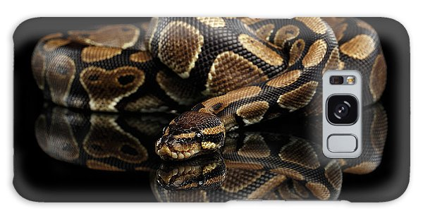 Ball Or Royal Python Snake On Isolated Black Background Galaxy Case