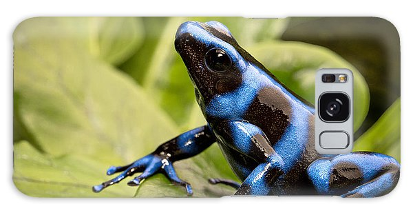 Blue Poison Dart Frog Galaxy Case by Dirk Ercken