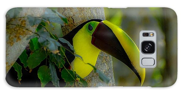 Chestnut-mandibled Toucan Galaxy Case