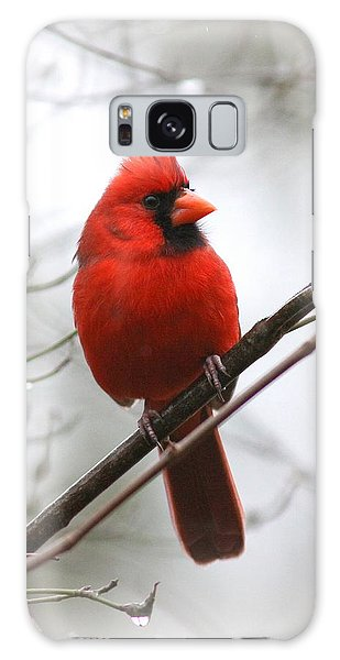 4772-001 - Northern Cardinal Galaxy Case
