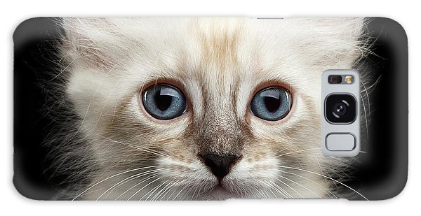 Cat Galaxy S8 Case - Cute American Curl Kitten With Twisted Ears Isolated Black Background by Sergey Taran