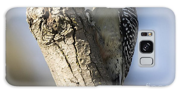 Red-bellied Woodpecker Galaxy Case