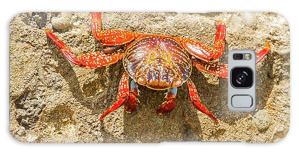 Sally Lightfoot Crab On Galapagos Islands Galaxy Case