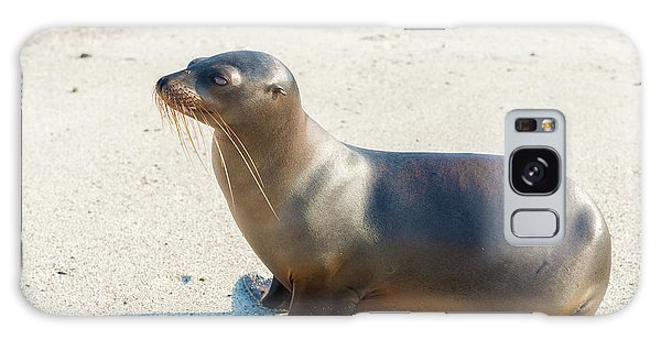 Sea Lion In Galapagos Islands Galaxy Case