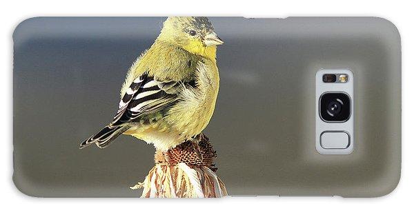 Lesser Goldfinch Galaxy Case