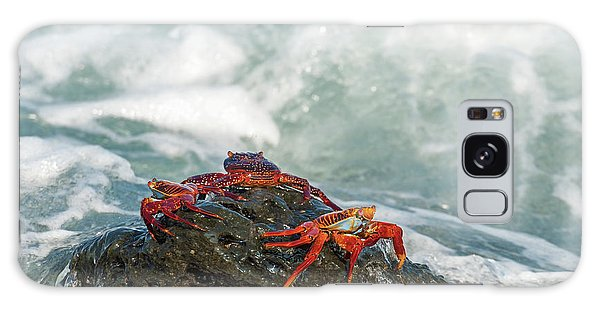 Sally Lightfoot Crab On Galapagos Islands Galaxy Case