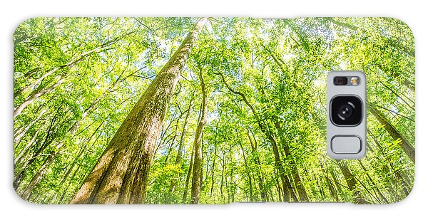 cypress forest and swamp of Congaree National Park in South Caro Galaxy Case