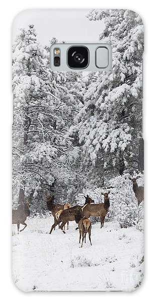 Elk In Deep Snow In The Pike National Forest Galaxy Case