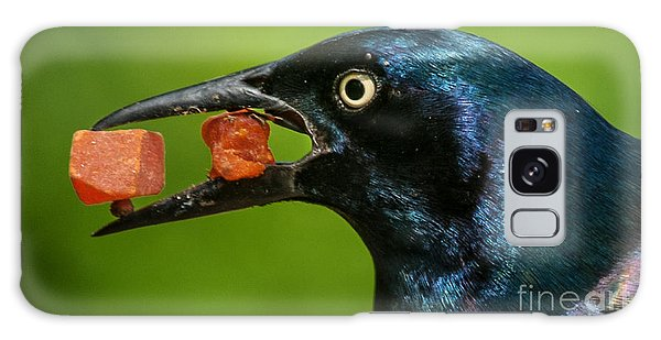 A Balanced Meal For A Grackle Galaxy Case by Jim Moore