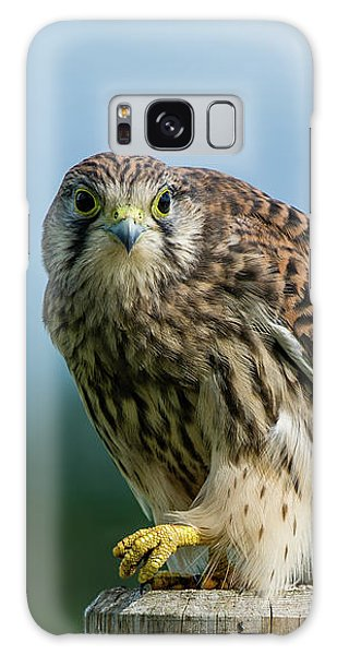 A Beautiful Young Kestrel Looking Behind You Galaxy Case
