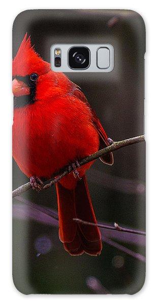 A Cardinal In January  Galaxy Case