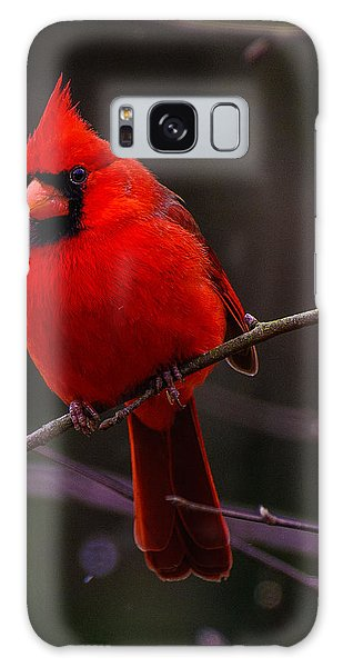 A Cardinal In January  Galaxy Case