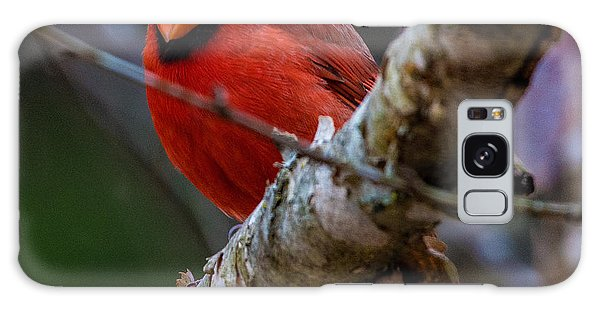A Cardinal In Spring   Galaxy Case