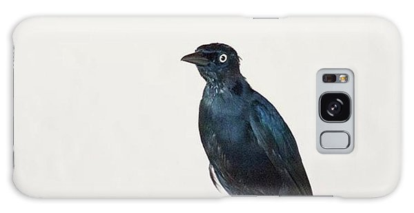 Galaxy Case - A Carib Grackle (quiscalus Lugubris) On by John Edwards