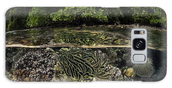 Feather Stars Galaxy Case - A Colorful Crinoid Clings To A Shallow by Ethan Daniels