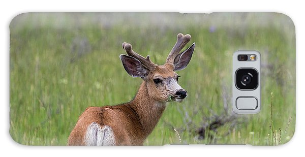 A Deer In Yellowstone National Park  Galaxy Case