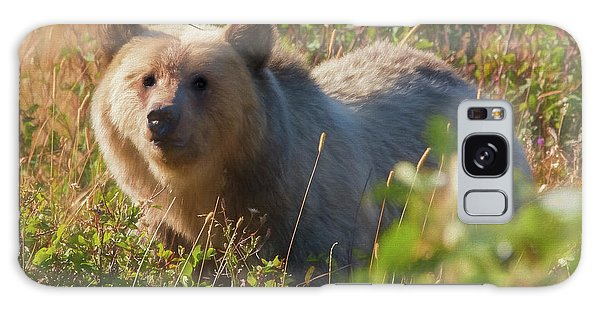 A  Female Grizzly Bear Looking Alertly At The Camera. Galaxy Case