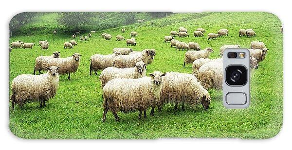 A Flock Of Sheep Galaxy Case