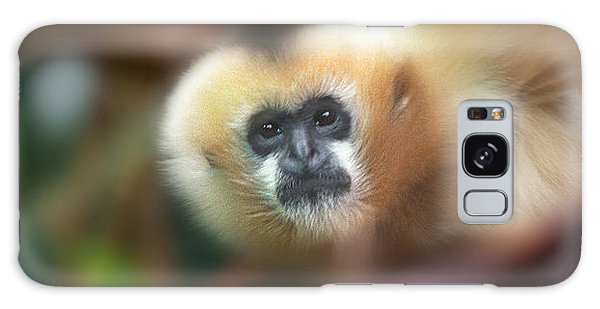 A Gibbon's Stare Galaxy Case by Greg Slocum