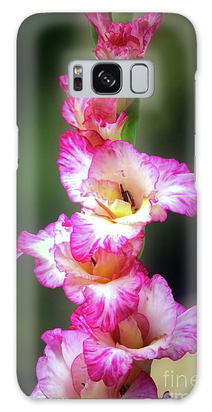 A Gladiolus Galaxy Case